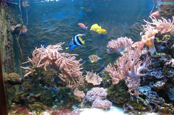 фото аквариума