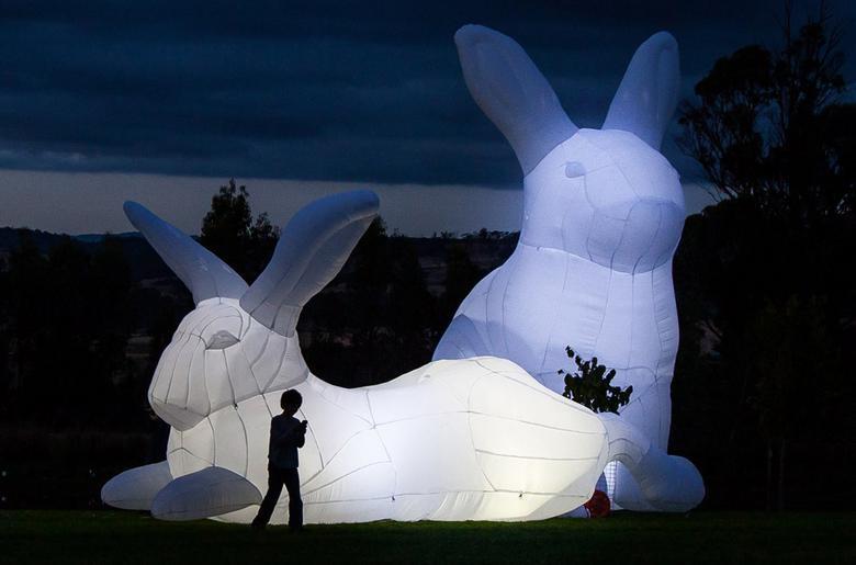 фото больших белых зайцев